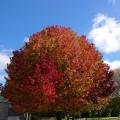 NZは秋です