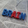 バイリンガルは脳が違う?